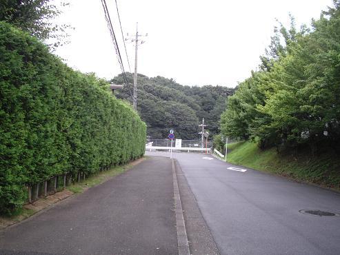 shinyuri1032.jpg