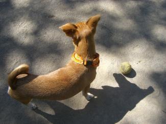 dog2_20091004085705.jpg
