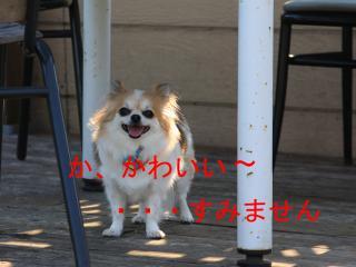 IMG_7023.jpg
