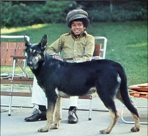 Michael-and-animals-michael-jackson-18839326-800-736.jpg