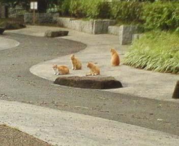 公園 猫図鑑   №639