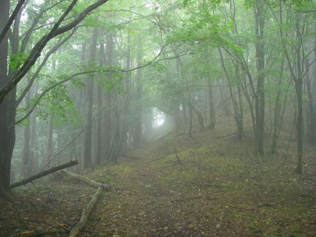 奥多摩ー天目山~天祖山H20.9.20 016
