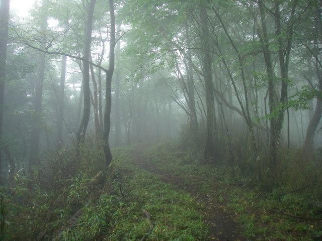 奥多摩ー天目山~天祖山H20.9.20 013