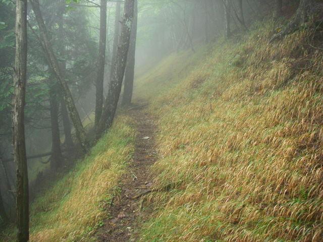 奥多摩ー天目山~天祖山H20.9.20 022