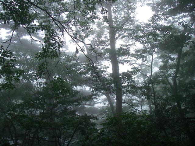 奥多摩ー天目山~天祖山H20.9.20 020
