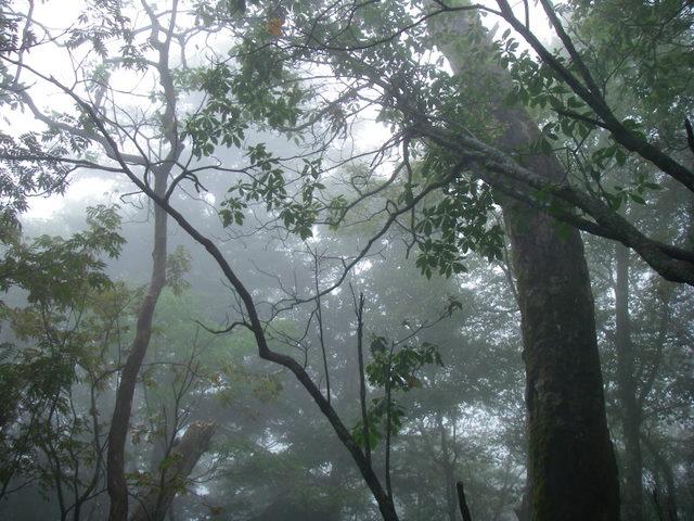 奥多摩ー天目山~天祖山H20.9.20 032