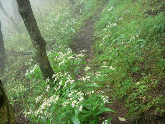 奥多摩ー天目山~天祖山H20.9.20 035