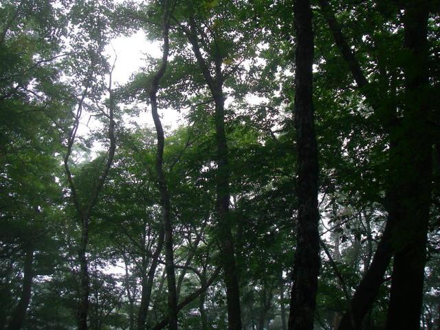 奥多摩ー天目山~天祖山H20.9.20 050