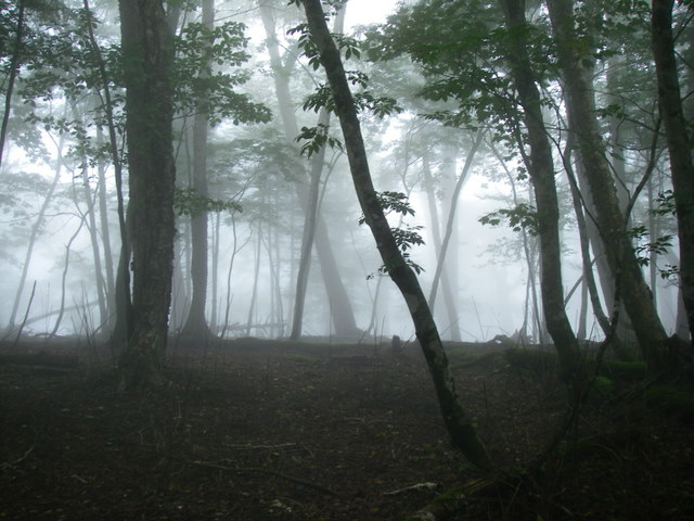 奥多摩ー天目山~天祖山H20.9.20 049