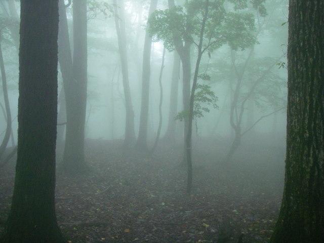 奥多摩ー天目山~天祖山H20.9.20 053