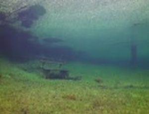 水没した公園の幻想的な風景
