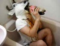 鹿男あほによし,コーラとフリスクを合わせて飲んでみた。