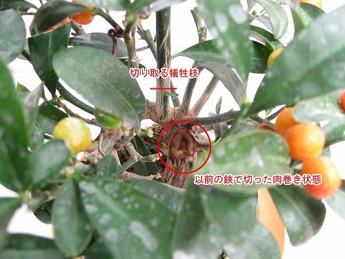 10_monita2_4.jpg