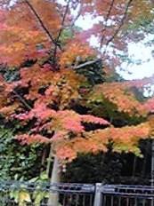 momiji+iti_convert_20091201101043.jpg
