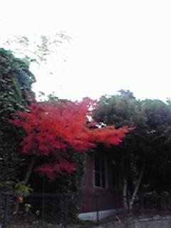 momiji+sann_convert_20091201101205.jpg