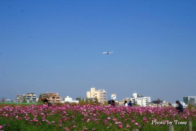 こすっもす畑と飛行機
