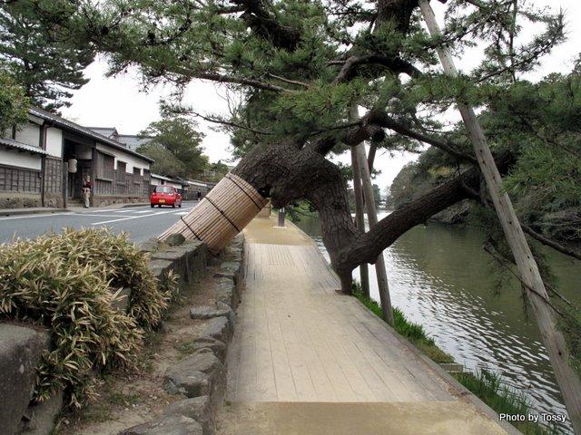堀と松並木