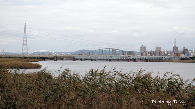 ススキと淀川
