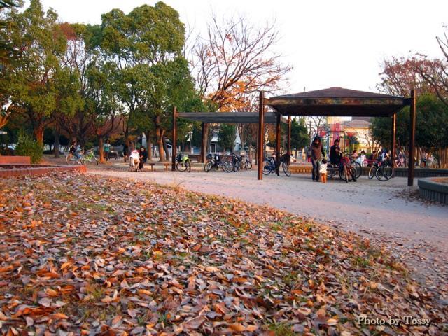落ち葉の公園4