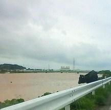 日高川と牛