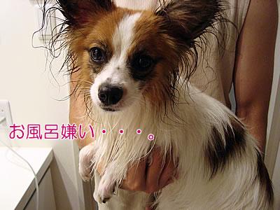 お風呂嫌い・・・。