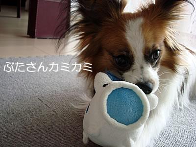 10su_89.jpg