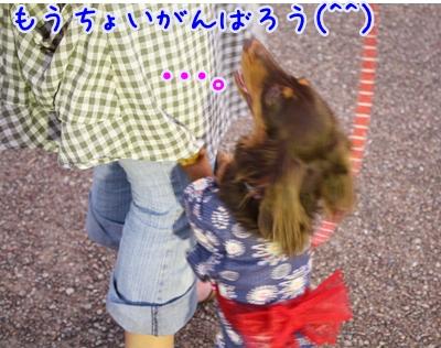 IMG _3183