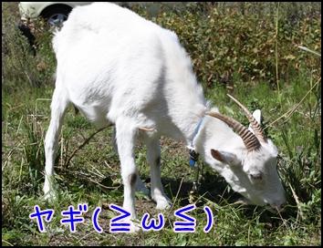 軽井沢3495