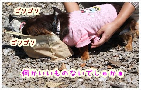 軽井沢3522