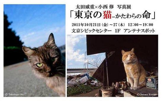 tokyononeko_shashinten.jpg