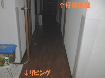 この廊下を通って