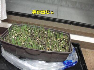 芽が出たぁ