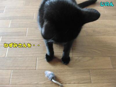 ネズミさんを・・