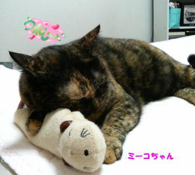 ミーコの枕♪