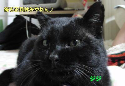 ボス猫 ジジくん♪
