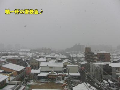 うっすら雪景色♪