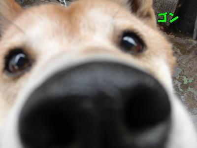 鼻デカゴン