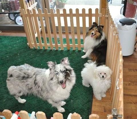 プーと看板犬たち