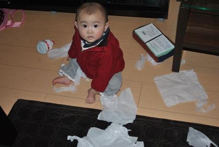 tissue20110222_1.jpg