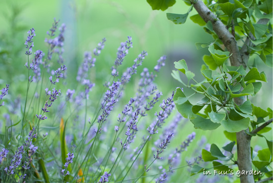 fuus garden