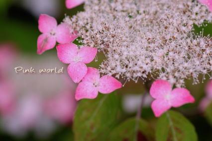 ajisai_20100623174451.jpg