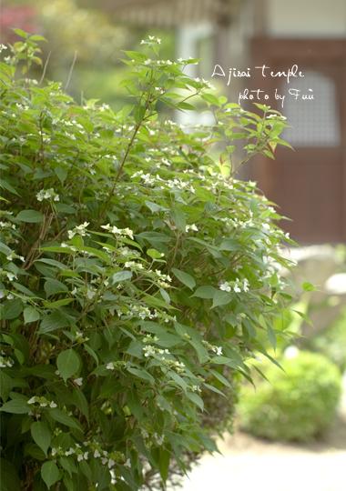 ajisai_20110607172252.jpg