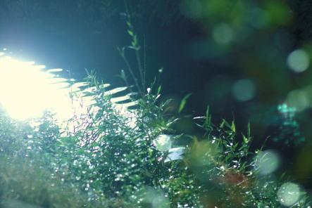 asa1_20101026213142.jpg
