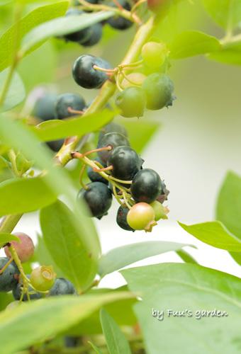 berry_20110722234941.jpg