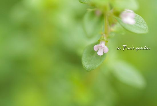 garden1_20110706125609.jpg