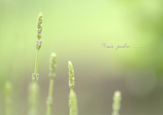 garden_20110607172319.jpg