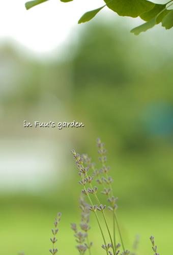 garden_20110623232330.jpg