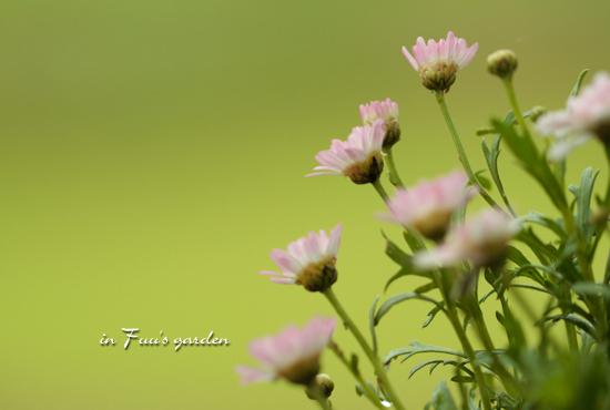garden_20110706125610.jpg