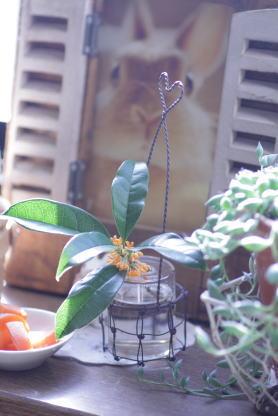 ichigo_20101005185738.jpg