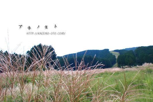 kenmori_20100913162656.jpg
